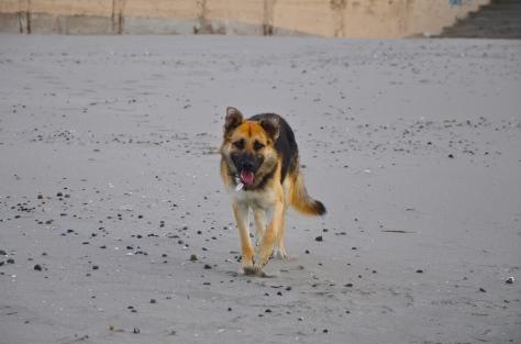 Lonco en la playa